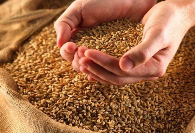 сельское хозяйство, качественное продовольствие