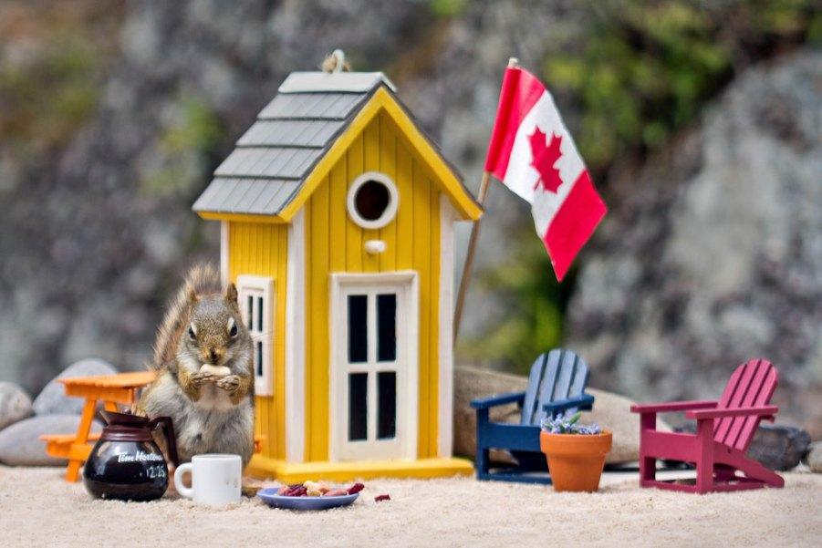 программа доступное жилье, Канада