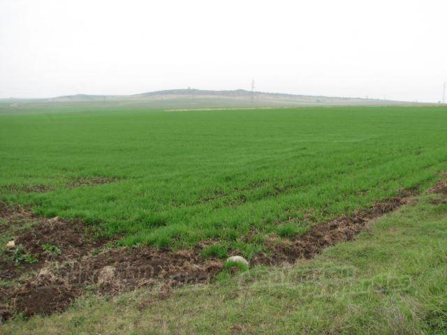 сельскохозяйственная земля, цены