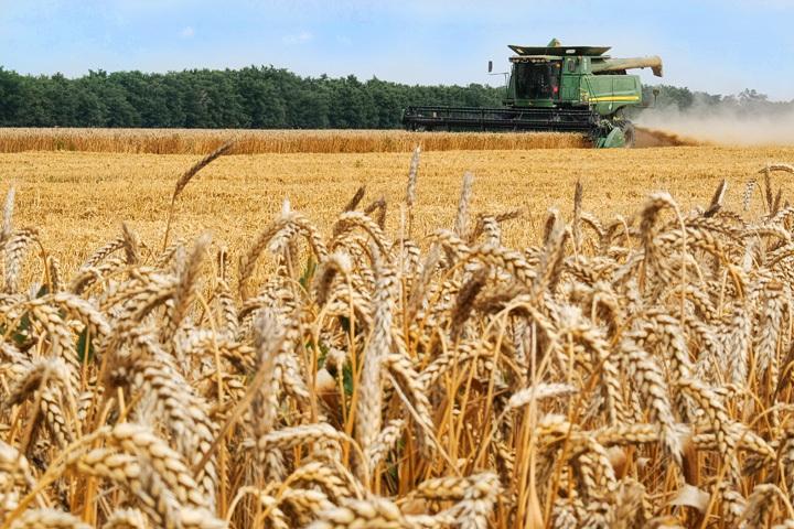 США, Индия, урожай зерновых