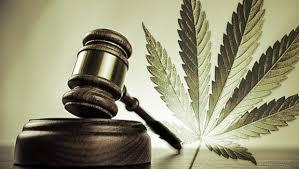 легализация марихуаны, каннабис
