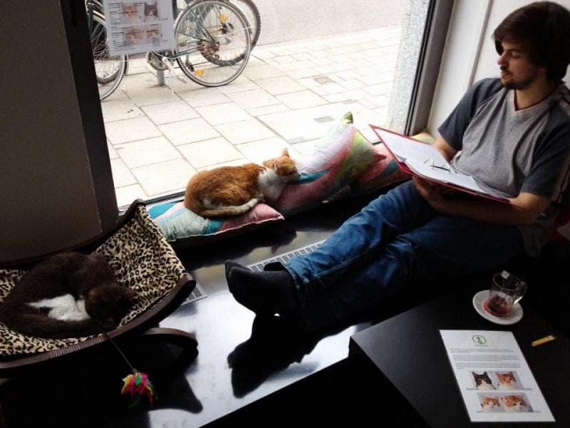 Япония, животные, стресс, работа