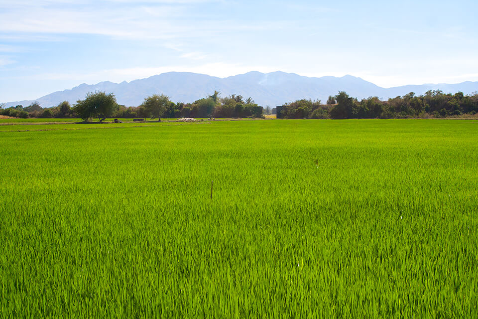 Дананг, ферма, безопасность