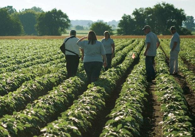 Мичиган, DF Seed, Tillerman Seeds, продажа семян