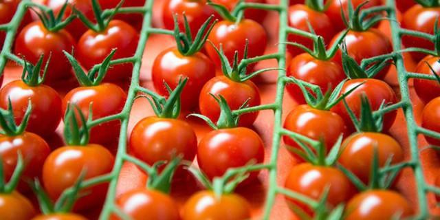 реэкспорт, томаты, сертификаты, РФ