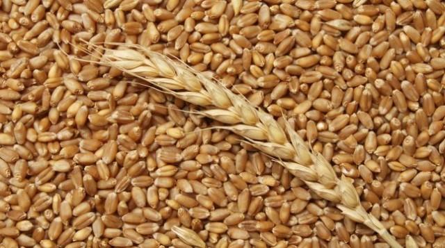 вывоз зерна, пшеница, РФ