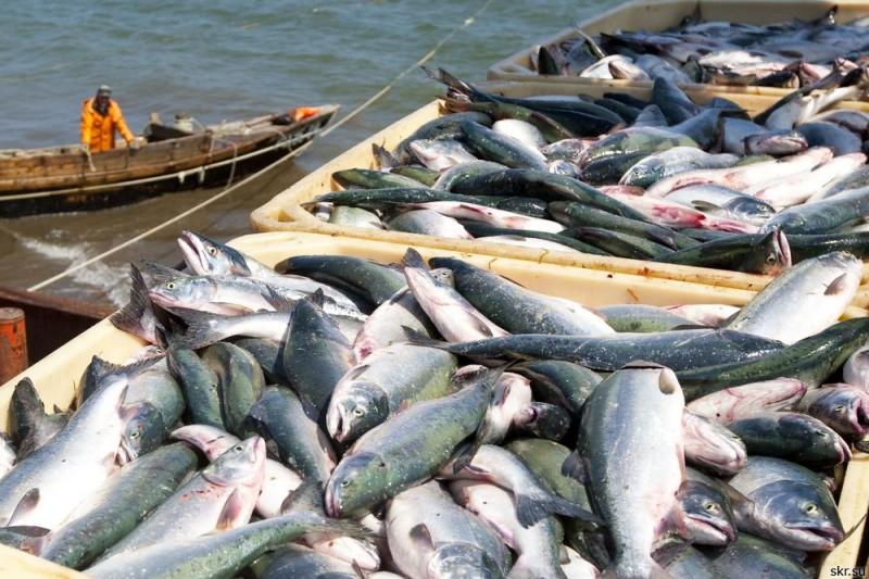 экспорт рыбы, рыба, Бразилия, Европейский Союз, ЕС