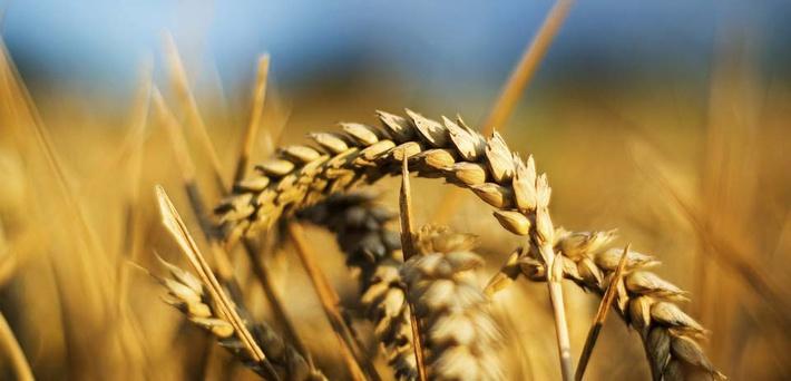 Россия, Индонезия, зерно, пшеница