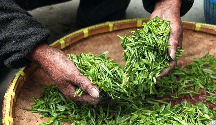 чай, Шри-Ланка, Россия, РФ