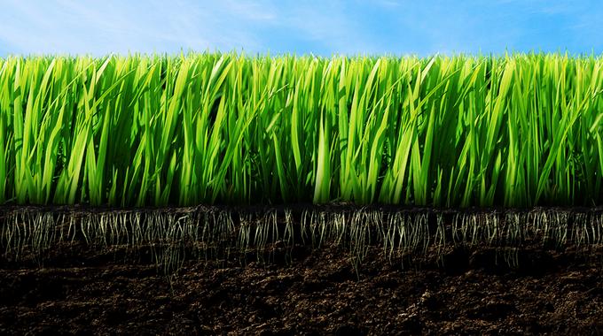сельскохозяйственный, плодородная земля