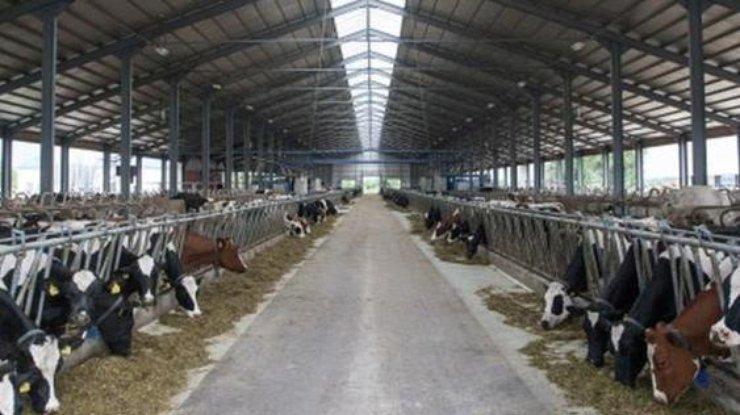 молочная продукция, молочка, молоко, Польша, Китай
