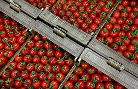 РФ, Турция, томаты, пшеница