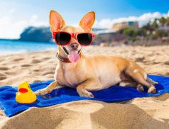 домашние животные, отпуск
