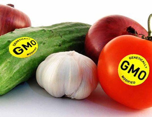 ГМО, продукты с ГМО, генная инженерия, ЕС, Европейский суд