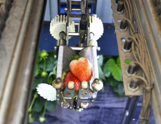 клубника, сбор клубники, робот, Agrobot, фермер, ягоды, урожай