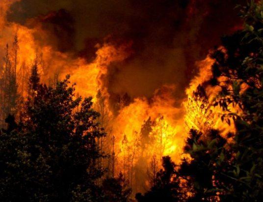 жара, аномальная жара, лесные пожары, изменение климата, глобальное потепление, Ханс Йоахим Шелльнхубер