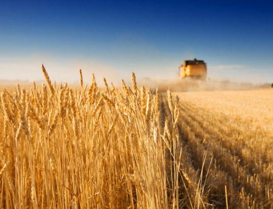 земельная реформа, реформы в Украине, новый закон о земле, требования МВФ