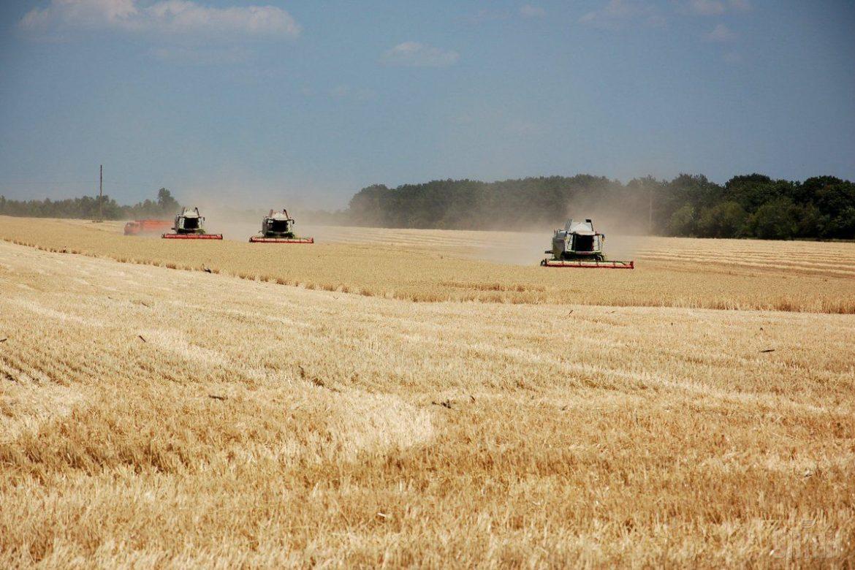 урожай, зерновые, Украина, пшеница, экспорт, статьи