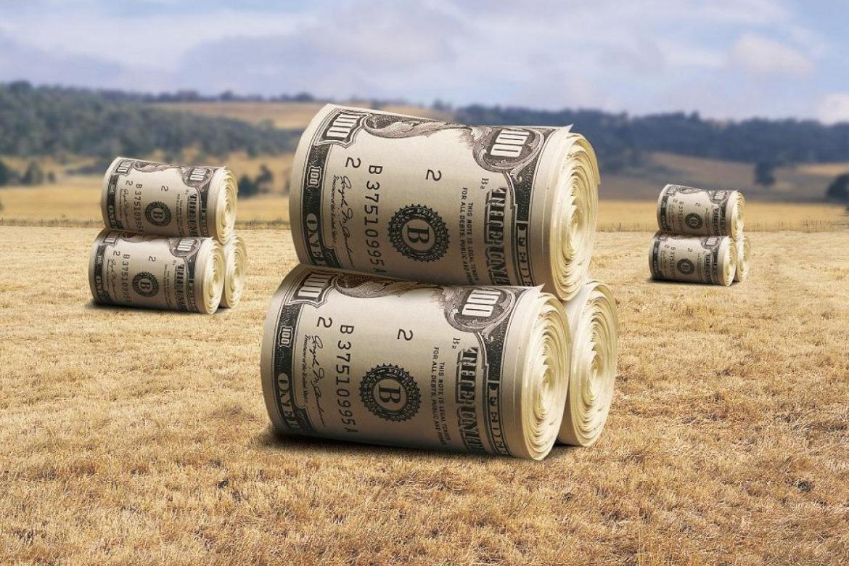 инвестиции в сельское хозяйство, развитие аграрного сектора, животноводство и растениеводство, сельское хозяйство Украины