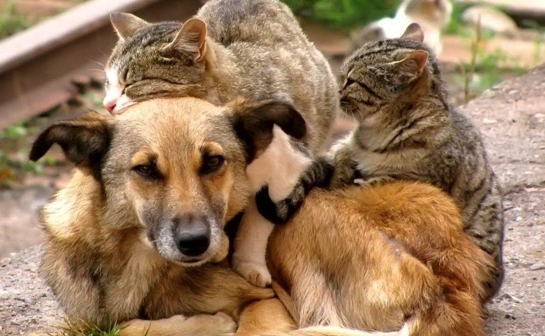 Картинки по запросу Налог на домашних животных в России 2019сколько нужно будет платить за больших и маленьких собак, кошек, новости