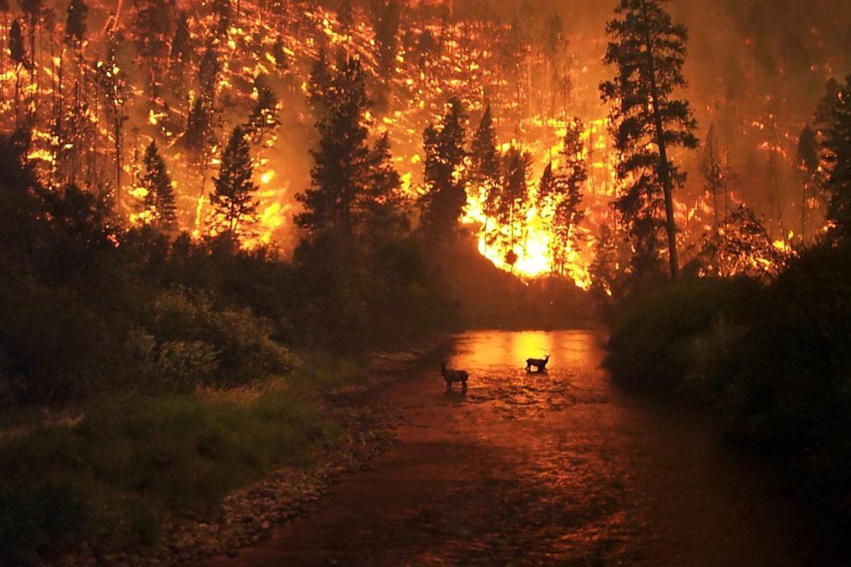 Картинки по запросу сибирские леса горят