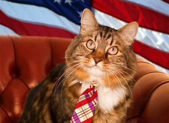 Кот в политике