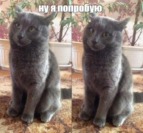 неуверенный котенок