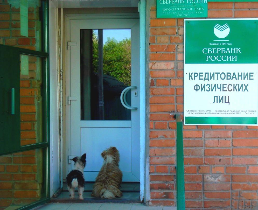 Собаки-физлица