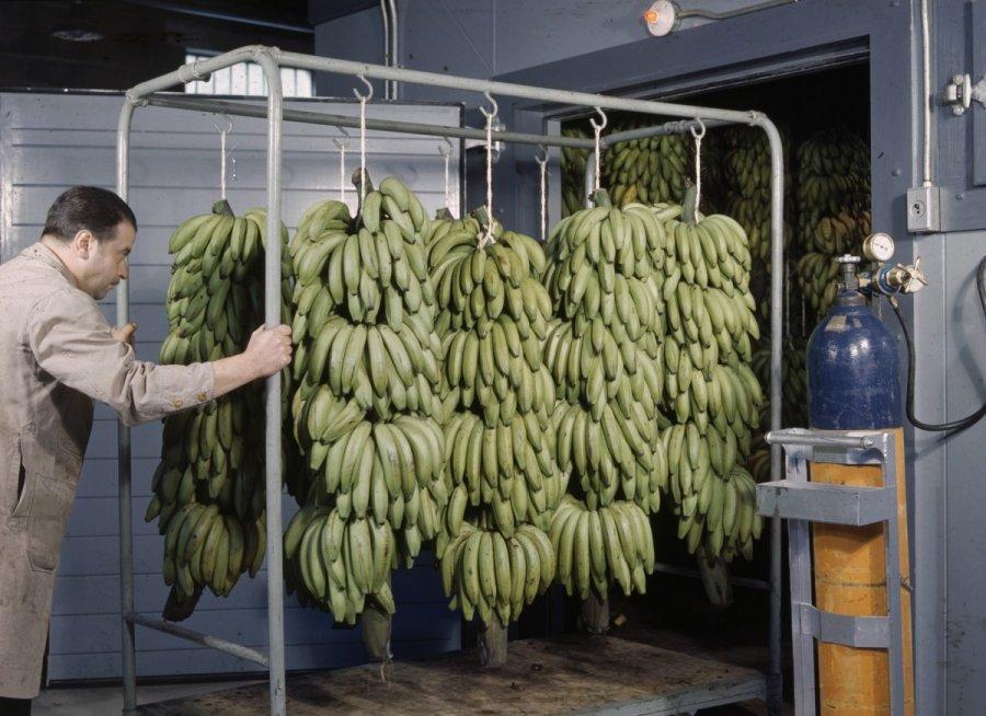бананы в газовой камере