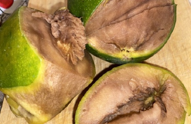 гнилой авокадо