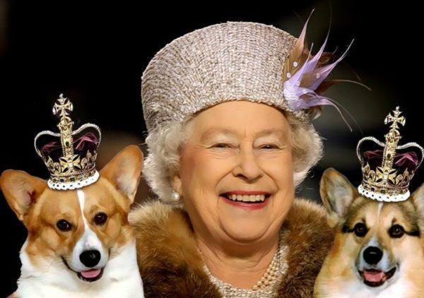 Королева Елизавета II и собаки