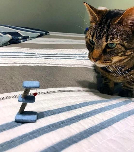 очень маленькая когтеточка для кота