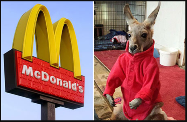 МакДоналдс и кенгуру