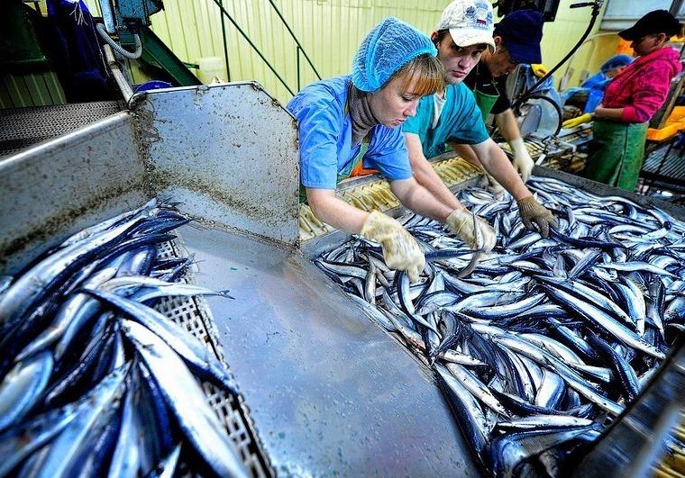 фасовка рыбы