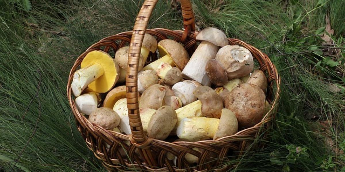 лукошко с грибами