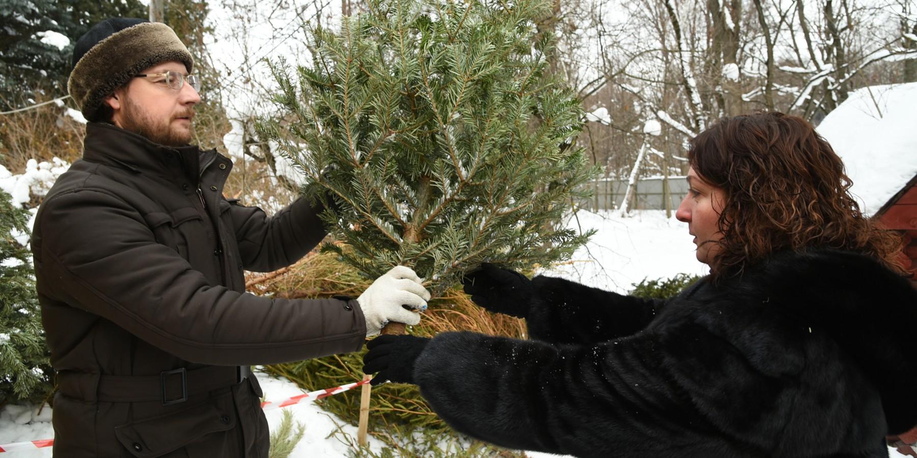 передавать елку в руки