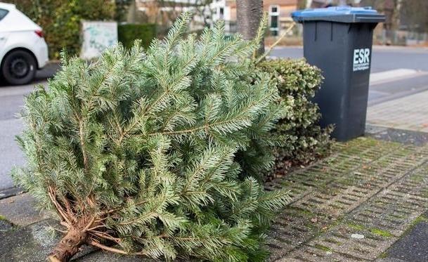 выбросили елку