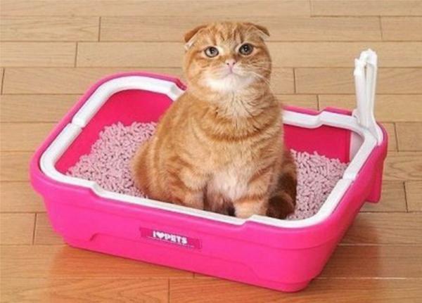 кот на лотке