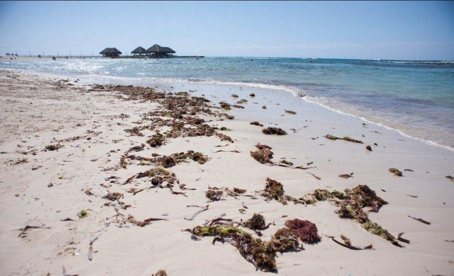 водоросли на берегу