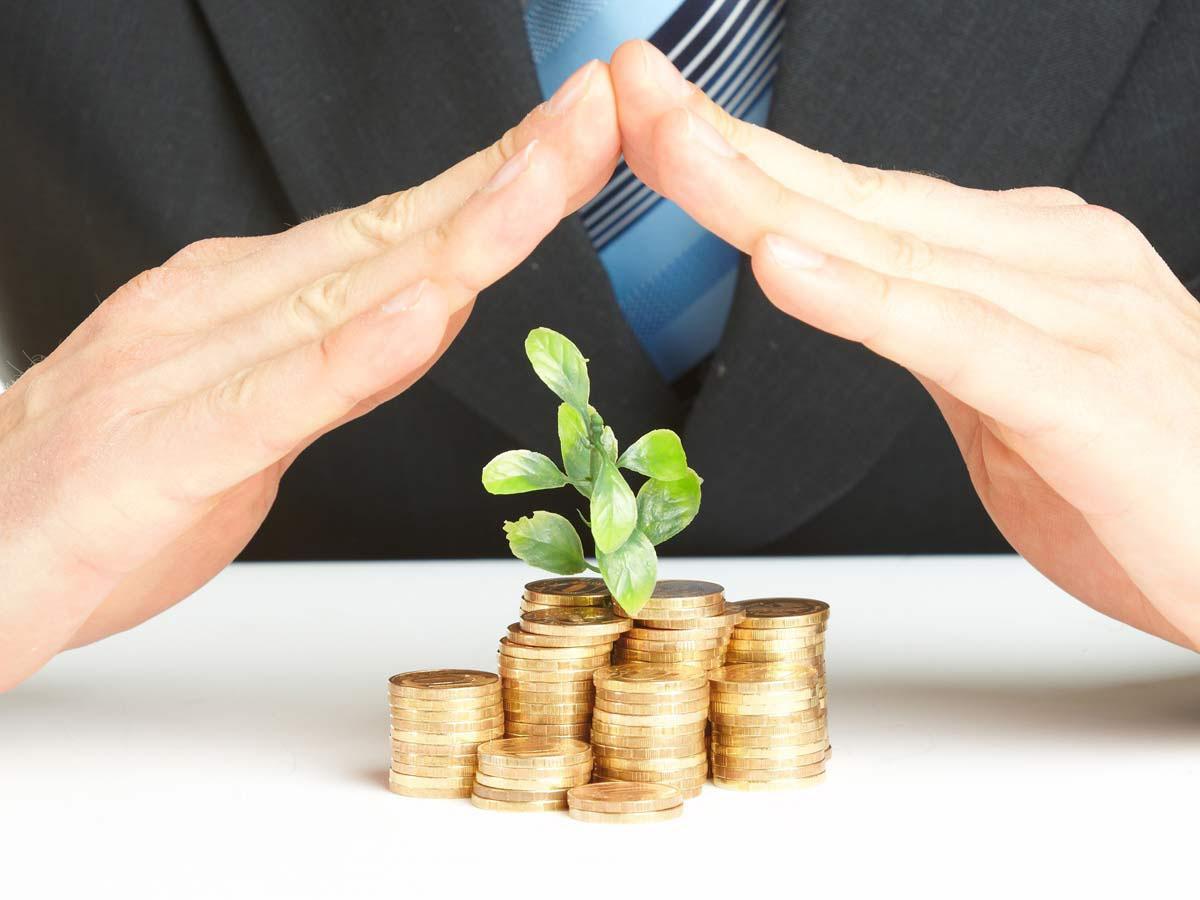 монетки и денежное дерево