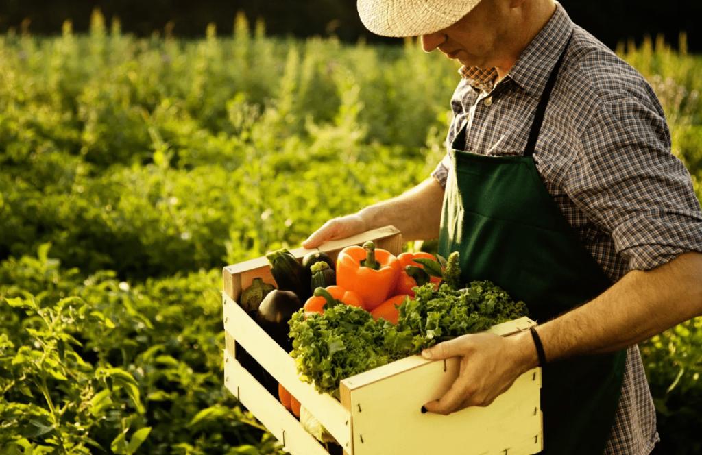 Фермер несет ящик с овощами