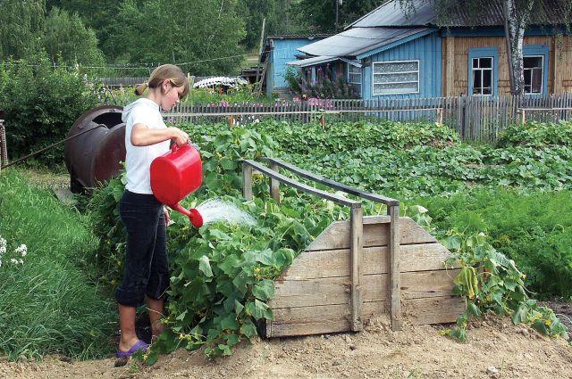 Девочка-подросток поливает грядки из лейки на дачном участке
