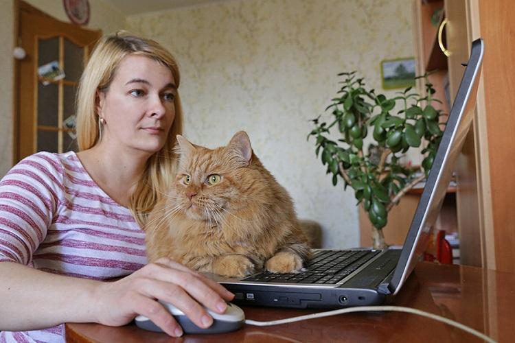 Женщина за ноутбуком с котом