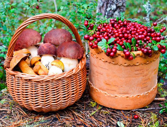 Грибы в корзине и ягоды