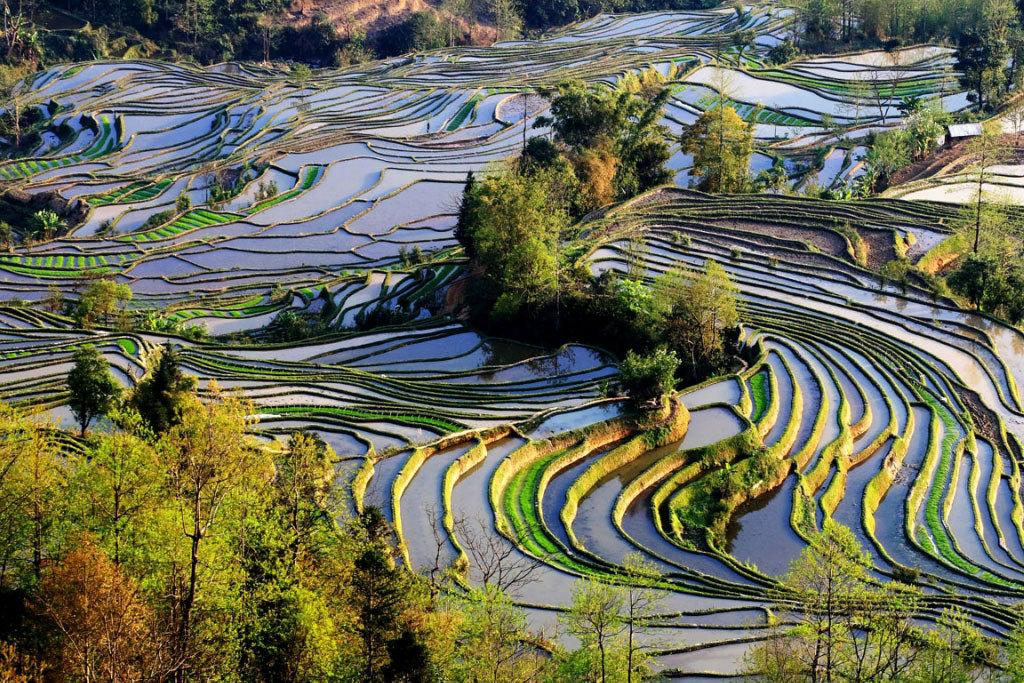 Рисовые поля Китая вид сверху