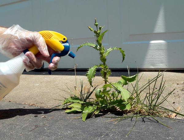 Опрыскивание сорняка из пульверизатора