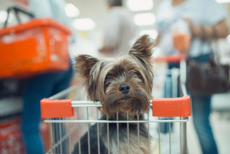 Собака в тележке в супермаркете