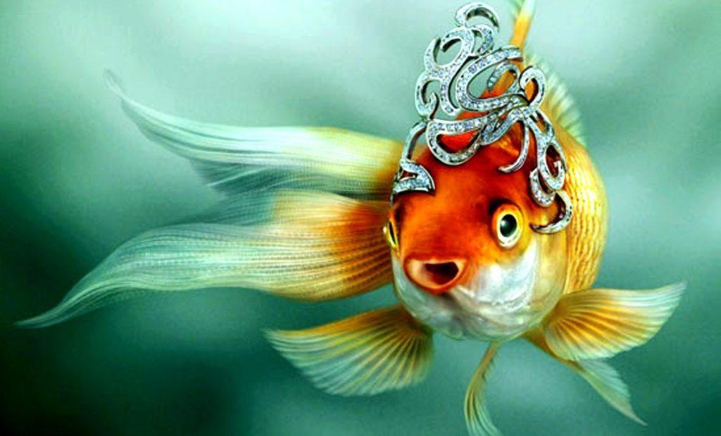 Золотая рыбка в короне