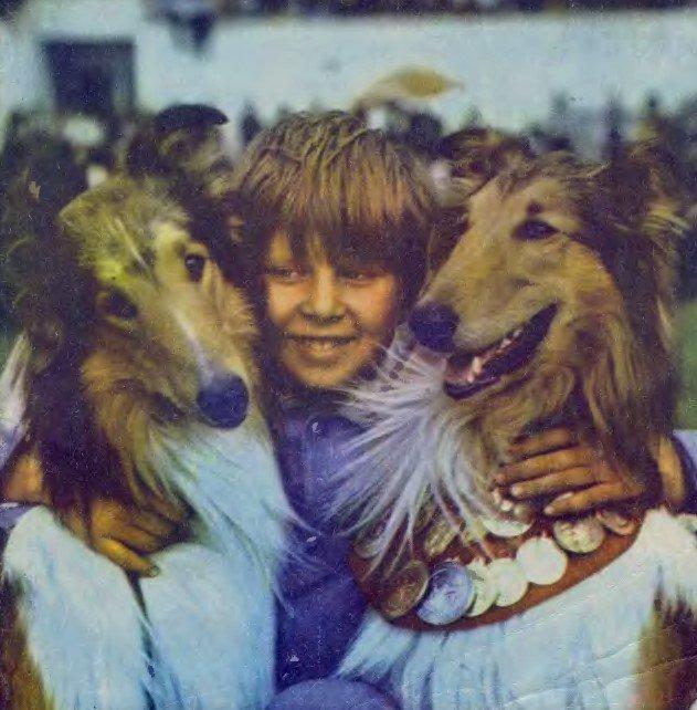 Мальчик с двумя собаками колли