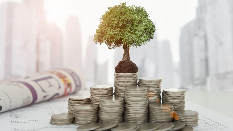 Монеты и растущее деревце из них